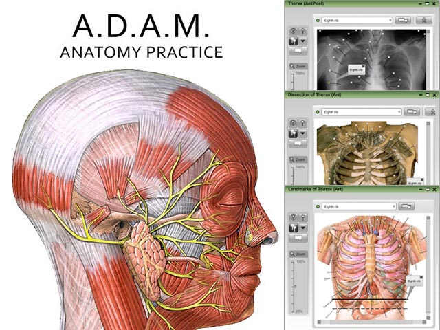 A.D.A.M. Anatomy Practice Online Student